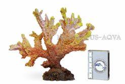 Кораллы, ветви, чаши, звезды, губки