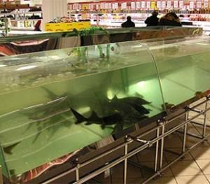 аквариум-прилавок-1