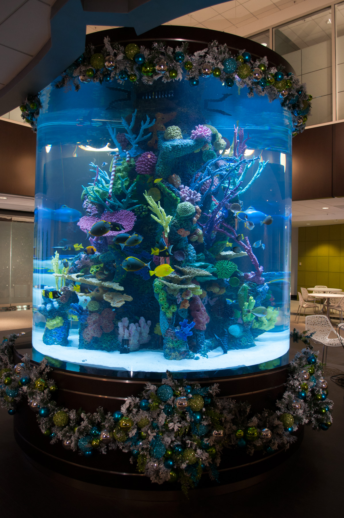 Acrylic-Tank-Manufacturing-Tanked-Giant-Holiday-Tank-2