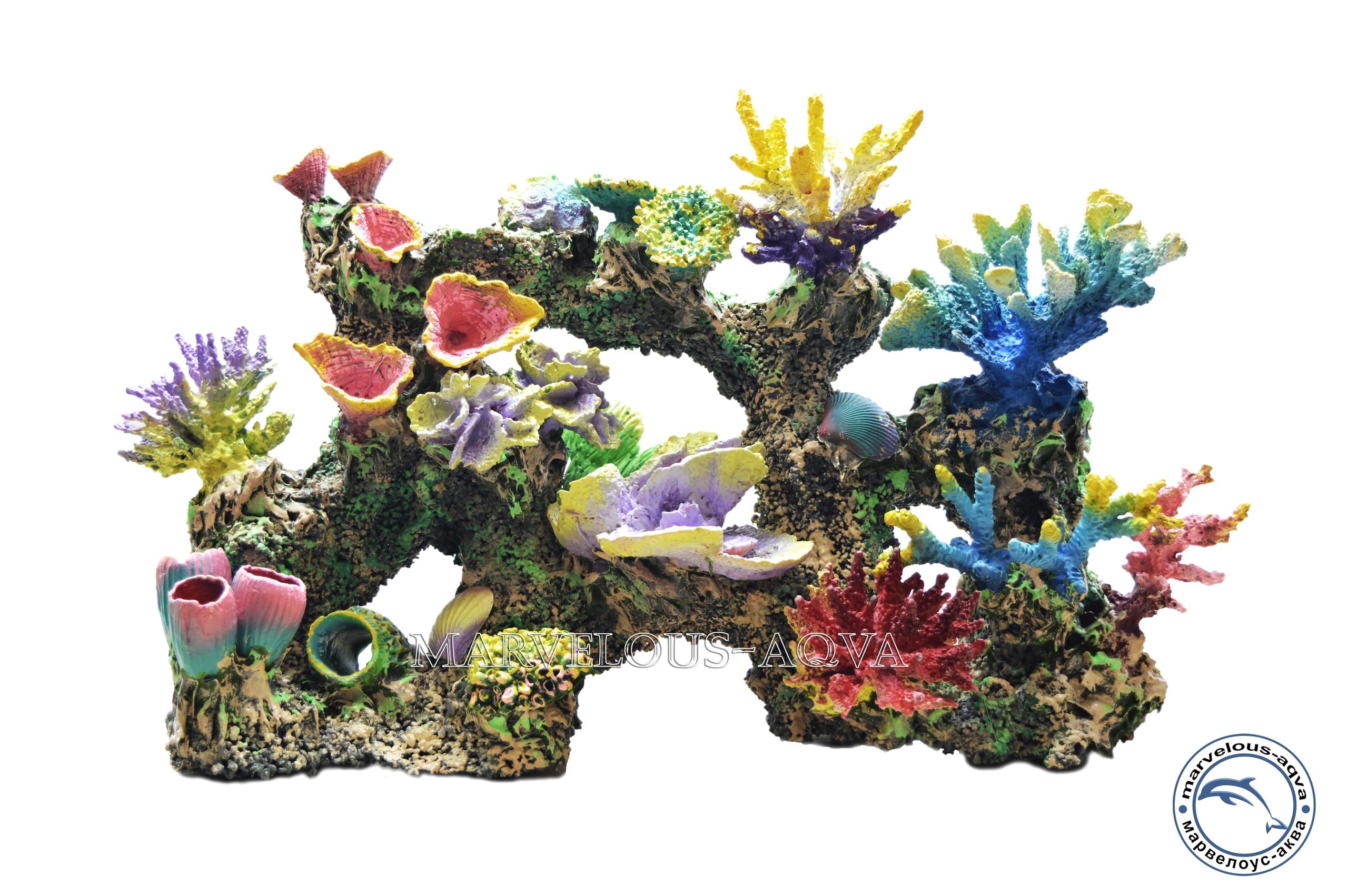 рифы и кораллы